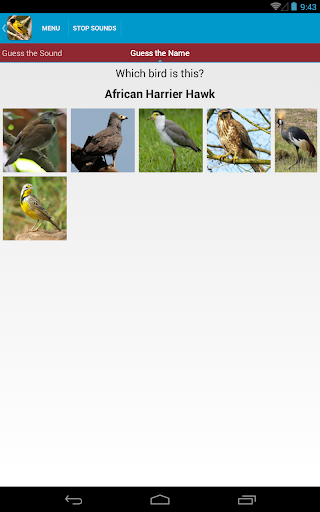 Download African Birds Sounds Free Google Play softwares