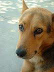 Cara de perro