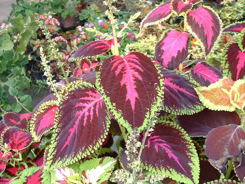 Fotos Gratis  Naturaleza - Flores - Hojas coloristas