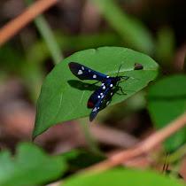 Belize Jungle Habitat
