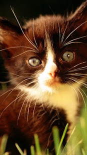Cute Cat Wallpapers 1 - screenshot thumbnail