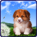 Puppy Live Wallpaper Free icon