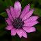 aIMG_4093_cr.jpg