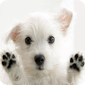 Perritos live wallpapers