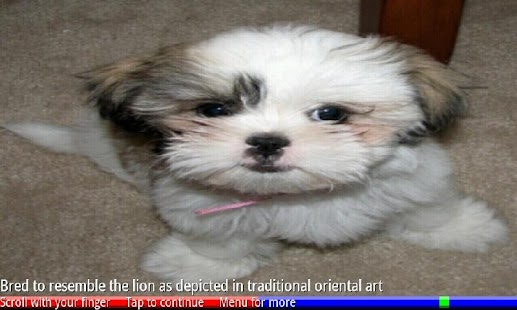 Puppies and Dogs 3 FREE- screenshot thumbnail