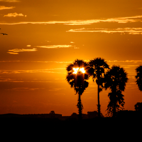 Hide & seek by Mahul Mukherjee - Landscapes Sunsets & Sunrises ( colour, lights, sky, sunset, trees )