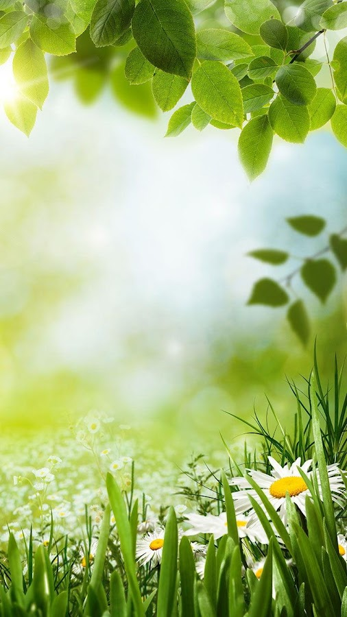 green spring background - photo #13