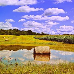 Hay in water by Vladimir Krizan - Landscapes Prairies, Meadows & Fields
