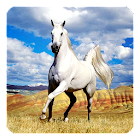Caballo Fondo Animado icon