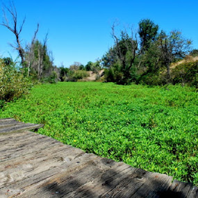 A river of green by Nikki Kean - Nature Up Close Leaves & Grasses ( water, nature, green, outdoors, plants )