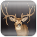 Deer Hunting Live Wallpaper ★