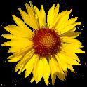 Flora of Yellowstone Region icon