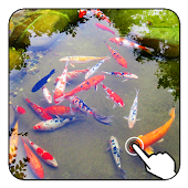 Magic Ripple:3D Fishes LWP