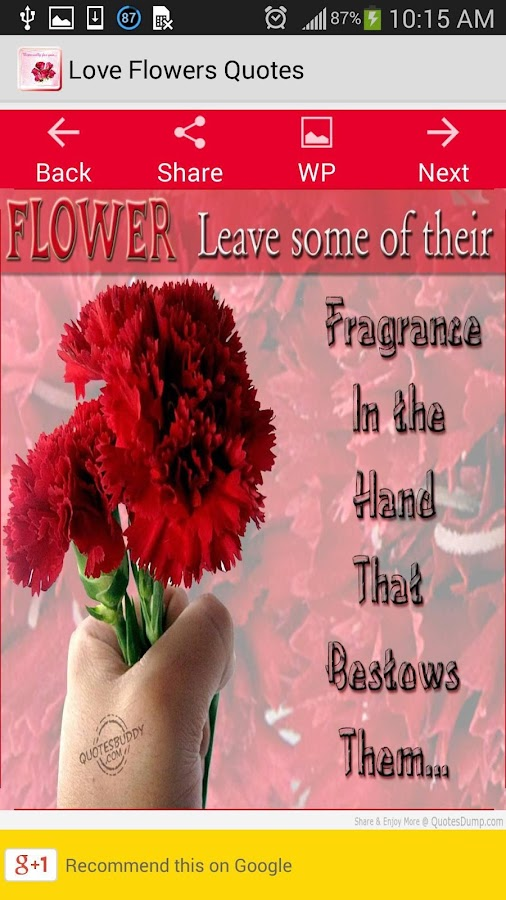 Flower Love Quotes Classy Love Flowers Quotes  Android Apps On Google Play