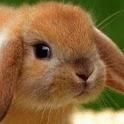 Tenderly Brown Rabbit logo