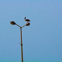 Farasan Island, KSA