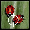 Real Ladybug Live Wallpaper logo