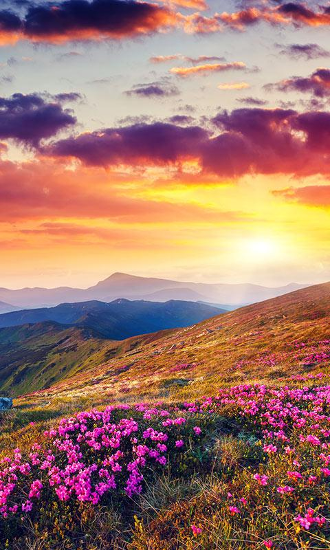 mountain flower live wallpaper  android apps on google play, Beautiful flower