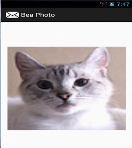 Bea Photo