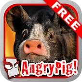 Angry Pig Free!