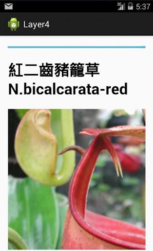 宏仔食蟲植物