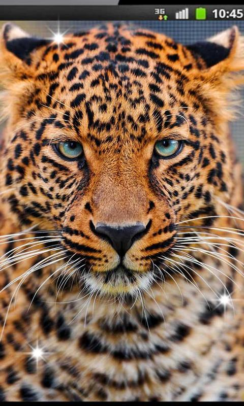 Leopard Sounds live wallpaper - screenshot