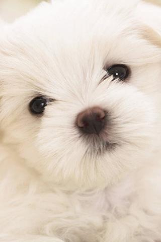 Puppies Wallpaper - screenshot