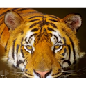 Top Ranked Wildlife Videos icon