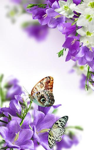 春天的花朵动态壁纸