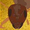 Ataque das Formigas Loucas icon