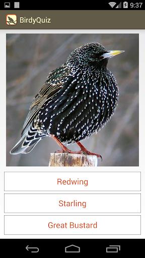 【免費益智App】BirdyQuiz-APP點子