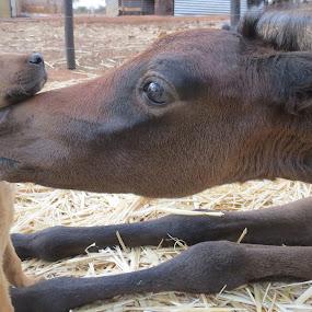 Friends  by Erika de Jager - Animals Horses