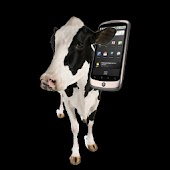 Cow Ringtones