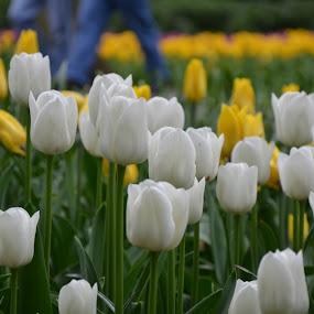 by Gobinathan Subramani - Flowers Flower Buds