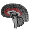 NeuroSlice icon
