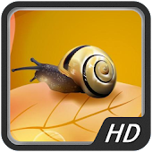 Beautiful Snail HD Wallpapers