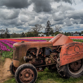 rusted by James Case - Transportation Other ( red, nature, rusted, retired, farmland, tulips, flowers, landscapes, tractor, photography )