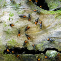 forest wasps