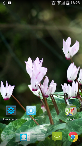 Real Flowers Live Wallpaper