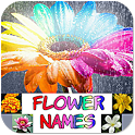 Flower Names, Colors, Features icon