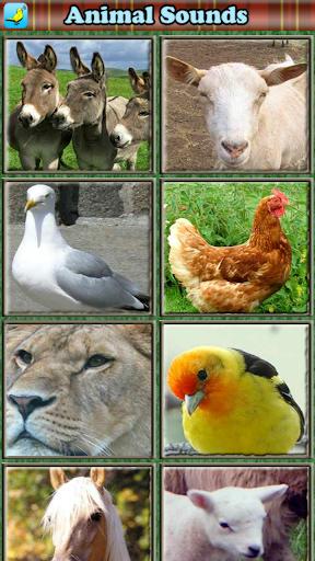 幼児のための動物の音|玩教育App免費|玩APPs