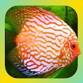 Tropical Fish Encyclopedia