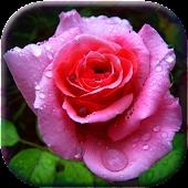 3D Rose Garden LWP