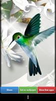 Screenshot of Hummingbirds HD Wallpaper