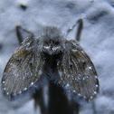 Bathroom Fly, Mosca-do-Filtro (PT-BR)