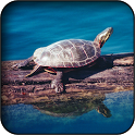 Turtle wallpapers icon