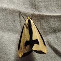 Clymen moth