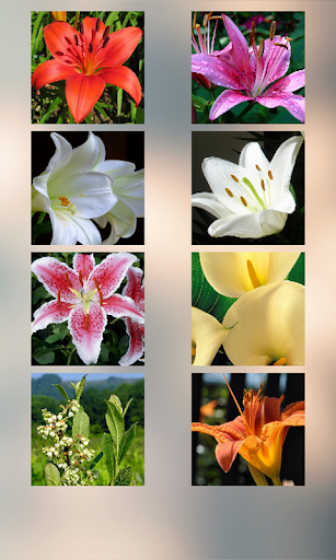 Lily Puzzle
