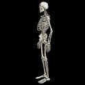 Funny dancing skeletonLWP FREE logo