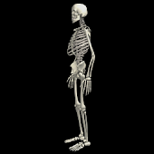 Funny dancing skeletonLWP FREE